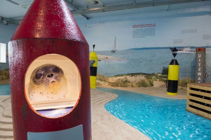 A Seal Zeehondenopvang en Expo Haringvliet